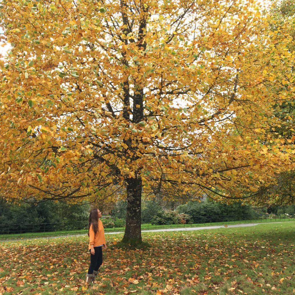 Autumn yoga Music Playlist